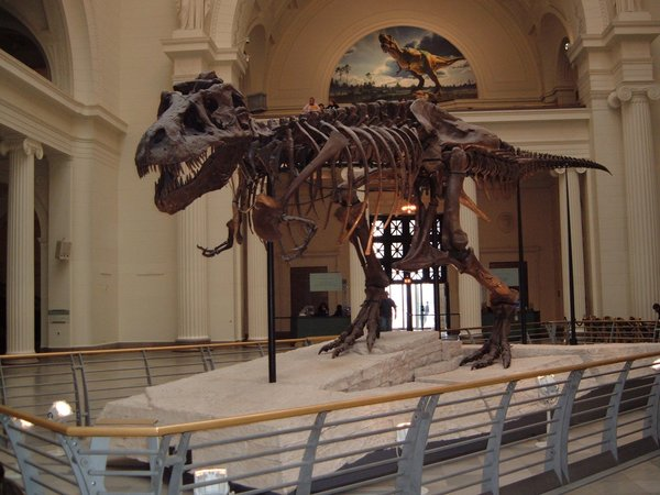 Sue, the world's largest T-Rex.