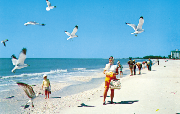 A postcard showing the beach at Marco Island. Reprinted from Marco Island by Austin J. Bell, Kaitlin Romey, and the Marco Island Historical Society (pg. 52, Arcadia Publishing, 2018).