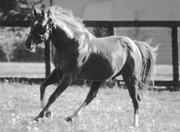 Secretariat, the most famous horse in Kentucky Derby racing history.