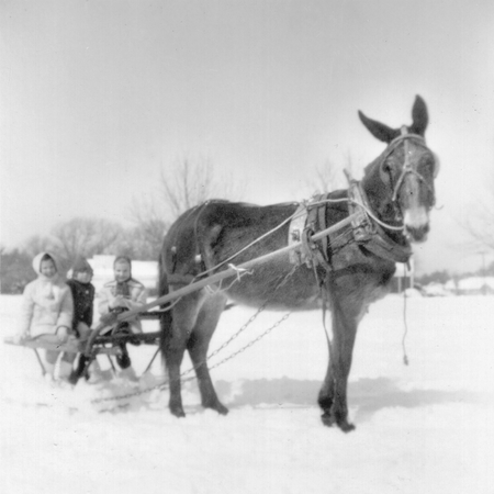 Children taking a sleigh ride during a snowstorm in Apex, North Carolina.