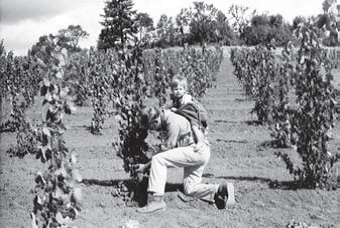 David Lett and his son, Jim Lett, working on vines at Eyrie Vineyards in Dundee Oregon. Reprinted from Oregon Wine Country Stories: Decoding the Grapes by Kenneth Friedenreich (pg 37, The History Press, 2018).