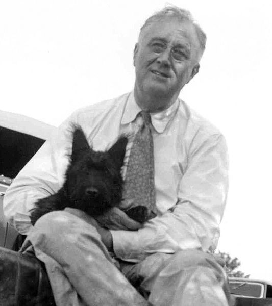 President Franklin D. Roosevelt with his terrier, Fala. Public Domain image via Wikimedia Commons.