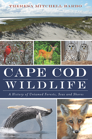 Cape Cod Wildlife