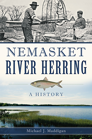 Nemasket River Herring